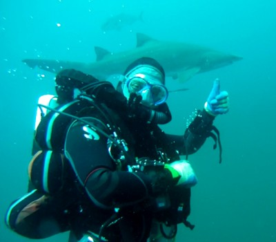 Scuba NY goes swimming with sharks